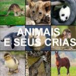 Correspondência Animais e seus Crias