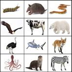 Audição Animais em inglês