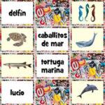 Animais marinhos em espanhol