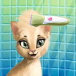 Cabeleireiro de Gatos