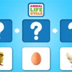 Ciclo de Vida Animal