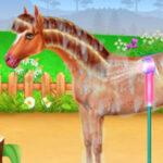 Cuidar de um cavalo