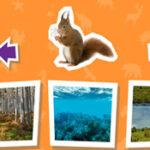 Habitat: onde vivem os animais?