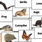 Nomes de Animais em Inglês