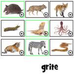 Ordene as Letras: Animais em francês