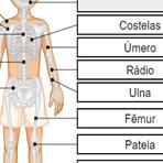 Nomear os Ossos do Corpo