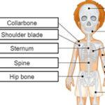Ossos do corpo em inglês