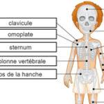 Bones of the Skeleton em francês