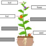 Peças de Planta em Inglês