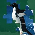 Quebra Cabeça Pinguins