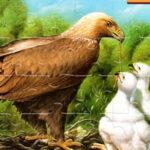 Quebra-cabeças de Pássaros Online