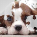 Quebra-cabeça de Filhotes de Animais