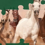 Quebra-cabeças de Cavalos