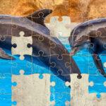 Quebra-Cabeças Golfinhos 64 Peças